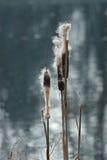Κάλαμος στον αέρα Στοκ Φωτογραφία