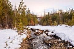 Κάλαμος στον πάγο και χιόνι στον ποταμό βουνών Στοκ εικόνα με δικαίωμα ελεύθερης χρήσης