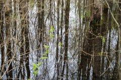 Κάλαμος στο ασημένιο νερό Στοκ Εικόνες