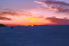 Κάλαμος στο ηλιοβασίλεμα Στοκ Εικόνα
