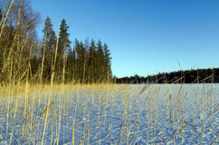 κάλαμος Στοκ φωτογραφία με δικαίωμα ελεύθερης χρήσης