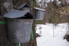 Κάδοι που συλλέγουν το σφρίγος Στοκ Φωτογραφία