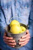 κάδος μήλων στα χέρια Στοκ Εικόνα