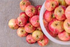 κάδος με τα κόκκινα μήλα που συλλέγονται και που βρίσκονται δίπλα σε έναν σωρό των μήλων Στοκ Εικόνα