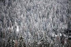 κάλυψη παγωμένη διανυσματικός χειμώνας προτύπων Στοκ φωτογραφίες με δικαίωμα ελεύθερης χρήσης