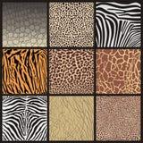 Κάλυψη των αφρικανικών ζώων Στοκ Εικόνες