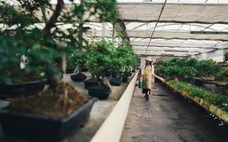 Κέντρο θερμοκηπίων μπονσάι σειρές με τα μικρά δέντρα Στοκ φωτογραφία με δικαίωμα ελεύθερης χρήσης
