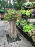 Κέντρο κήπων Στοκ φωτογραφίες με δικαίωμα ελεύθερης χρήσης