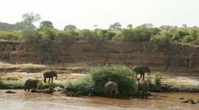 Κένυα, ανατολή Tsavo - ελέφαντες στην επιφύλαξή τους στοκ εικόνες