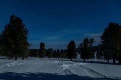 Κέδροι τοπίων χιονιού ουρανού αστεριών Στοκ φωτογραφία με δικαίωμα ελεύθερης χρήσης