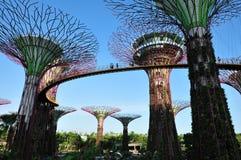 Κήποι από τον κόλπο στοκ εικόνα με δικαίωμα ελεύθερης χρήσης