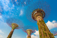 Κήποι από τον κόλπο σε Σινγκαπούρη στοκ εικόνα με δικαίωμα ελεύθερης χρήσης