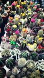 Κήποι κάκτων Στοκ εικόνα με δικαίωμα ελεύθερης χρήσης