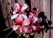 Κήποι λουλουδιών στοκ εικόνα