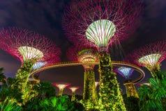 Κήποι πάρκων από τον κόλπο - Σιγκαπούρη στοκ εικόνα
