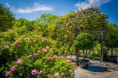 Κήποι στον εθνικό δενδρολογικό κήπο στην Ουάσιγκτον, συνεχές ρεύμα Στοκ φωτογραφία με δικαίωμα ελεύθερης χρήσης