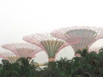 Κήποι της Σιγκαπούρης από τον κόλπο, πόλη της Σιγκαπούρης Στοκ φωτογραφία με δικαίωμα ελεύθερης χρήσης