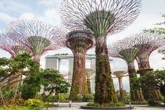 Κήποι της Σιγκαπούρης από τον κόλπο Στοκ φωτογραφία με δικαίωμα ελεύθερης χρήσης