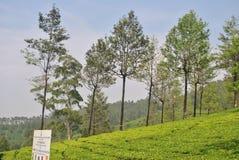 Κήποι τσαγιού σε Munnar, Κεράλα Ινδία Στοκ Εικόνες