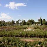 Κήποι των τριαντάφυλλων Τοπίο aires buenos της Αργεντινής Στοκ φωτογραφία με δικαίωμα ελεύθερης χρήσης