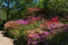 Κήποι Rhododendren και αζαλεών στοκ εικόνα