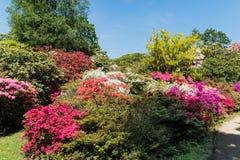 Κήποι Rhododendren και αζαλεών στοκ εικόνες