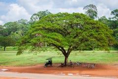 Κήποι Thom Angkor στο μέτωπο το πεζούλι ελεφάντων μέσα Στοκ εικόνες με δικαίωμα ελεύθερης χρήσης
