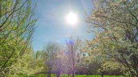Κήπος άνοιξη, άνθη κερασιών και ο ήλιος, χρόνος-σφάλμα κλίσης φιλμ μικρού μήκους