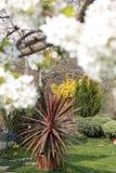 Κήπος άνοιξη με ένα ανθίζοντας δέντρο αχλαδιών στοκ εικόνα
