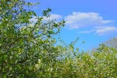 Κήπος δέντρων στην άνθιση κάτω από τον μπλε ουρανό άνοιξη Στοκ φωτογραφία με δικαίωμα ελεύθερης χρήσης