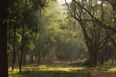 Κήπος δέντρων στο πάρκο Cubbon στη Βαγκαλόρη Ινδία στοκ εικόνες