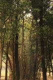 Κήπος δέντρων στο πάρκο Cubbon στη Βαγκαλόρη Ινδία στοκ φωτογραφίες