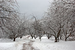 Κήπος δέντρων της Apple το χειμώνα Στοκ Εικόνες