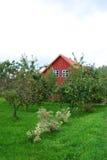 Κήπος δέντρων της Apple Στοκ φωτογραφία με δικαίωμα ελεύθερης χρήσης