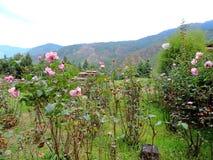 Κήπος έξω από την εθνική βιβλιοθήκη του Μπουτάν, Thimphu Στοκ εικόνες με δικαίωμα ελεύθερης χρήσης