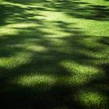 κήπος ανασκόπησης Στοκ εικόνα με δικαίωμα ελεύθερης χρήσης