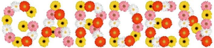 Κήπος από τη φύση άνοιξη λουλουδιών λουλουδιών που απομονώνεται στο λευκό Στοκ Εικόνα
