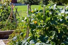 κήπος αστικός Στοκ φωτογραφίες με δικαίωμα ελεύθερης χρήσης