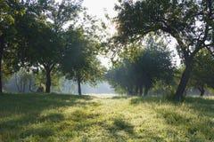κήπος αυγής μήλων Στοκ εικόνες με δικαίωμα ελεύθερης χρήσης