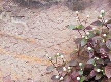 Κήπος βράχου. στοκ εικόνα με δικαίωμα ελεύθερης χρήσης