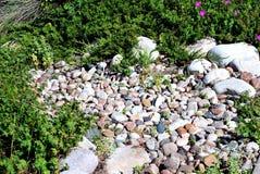 Κήπος βράχου Στοκ Εικόνα