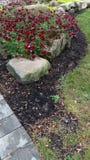 Κήπος βράχου Στοκ εικόνες με δικαίωμα ελεύθερης χρήσης