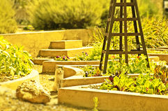 κήπος γατών Στοκ φωτογραφίες με δικαίωμα ελεύθερης χρήσης