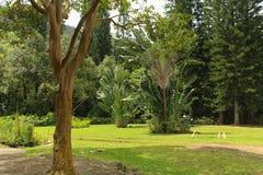 κήπος ειρηνικός Στοκ Εικόνες