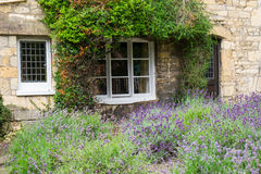 Κήπος εξοχικών σπιτιών με ευώδες lavender Στοκ εικόνες με δικαίωμα ελεύθερης χρήσης