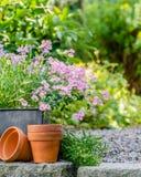 Κήπος εξοχικών σπιτιών - όμορφα λουλούδια στα δοχεία Στοκ φωτογραφία με δικαίωμα ελεύθερης χρήσης