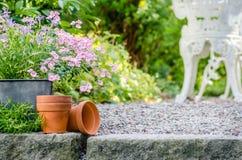 Κήπος εξοχικών σπιτιών - όμορφα λουλούδια στα δοχεία Στοκ Εικόνες