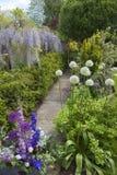 Κήπος εξοχικών σπιτιών Cotswold με Wisteria και Alliums, Αγγλία Στοκ φωτογραφία με δικαίωμα ελεύθερης χρήσης