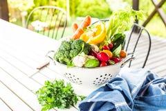 Κήπος - ζωηρόχρωμα λαχανικά άνοιξη στο τρυπητό υπαίθριο Στοκ Εικόνες