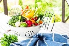 Κήπος - ζωηρόχρωμα λαχανικά άνοιξη στο τρυπητό υπαίθριο Στοκ εικόνες με δικαίωμα ελεύθερης χρήσης
